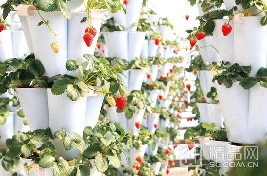 赏花摘草莓 穿越田园度假村美好时光