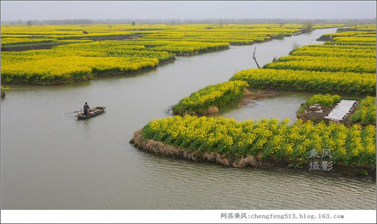 实拍:最美水上油菜花海(22图) - 乘风 - 乘風原创攝影图库