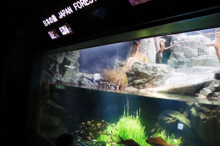 最特别的梦幻海底之旅——大阪海游馆