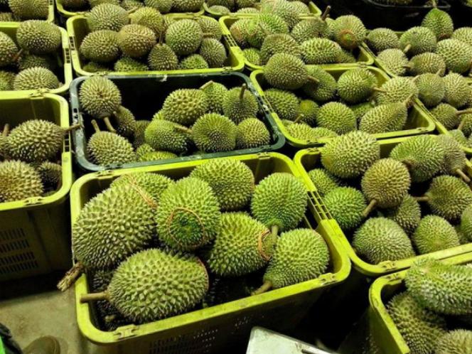 泰国旅游火爆,榴莲成为游客必买特产